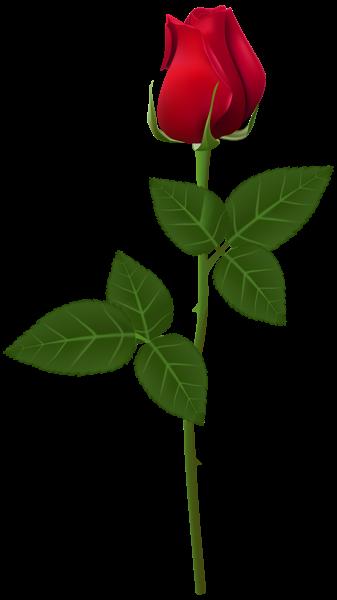 Red Flower Png Transparent