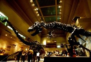 A Mounted Skeleton Of The Theropod Dinosaur Acrocanthosaurus At Houston Museum Natural Science In