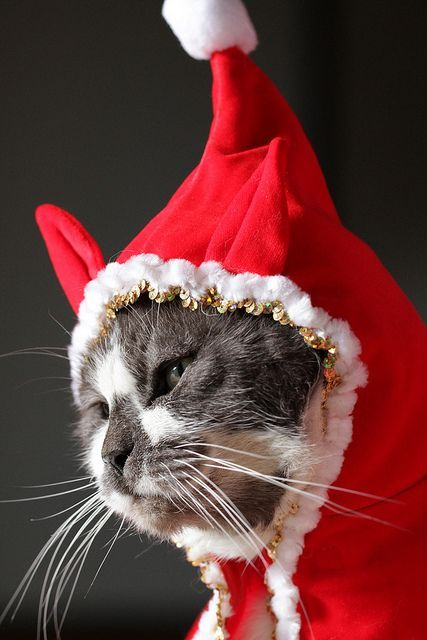 .Christmas Kitty Elf.