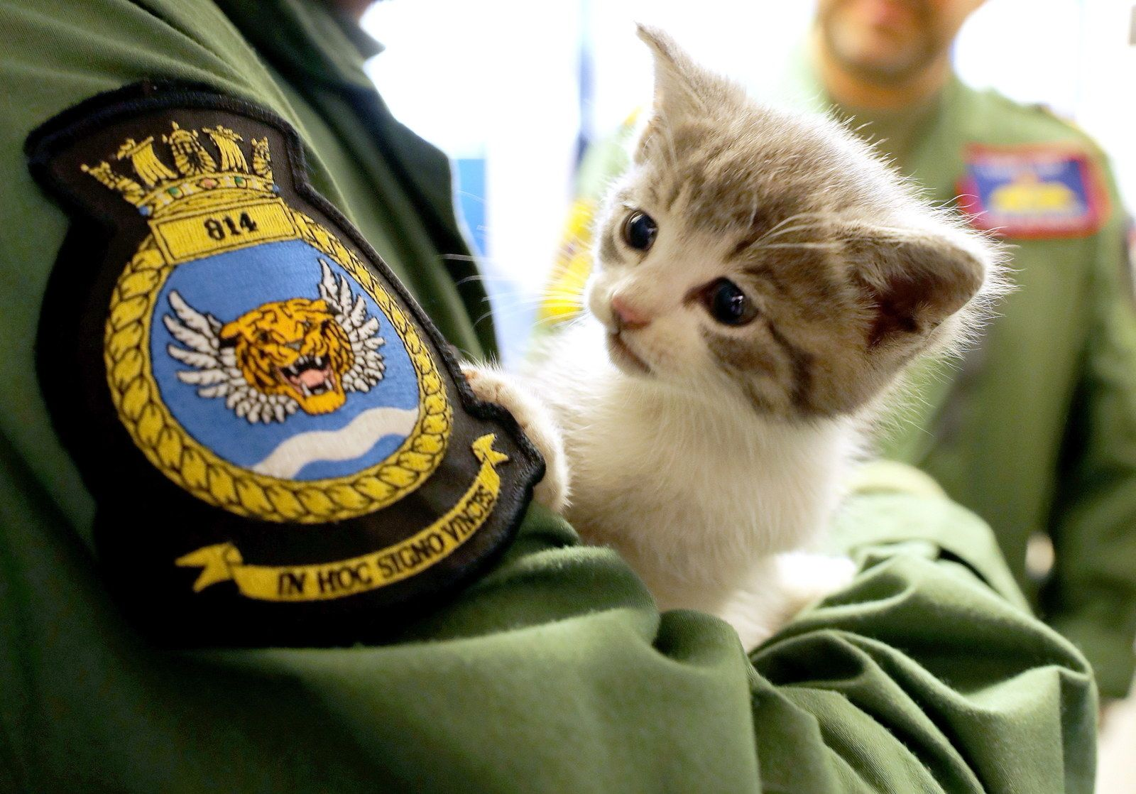 This Is Tigger A Renegade Kitten From Birmingham Who Clung To A Car As It Drove 300 Miles To A Naval Base In Cornwall Kitten Tiger Striped Cat Pilot Car