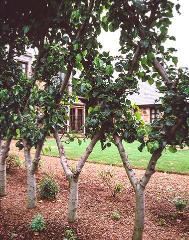 楽天ブックス: 果樹園芸学の基礎 - 伴野潔 - …