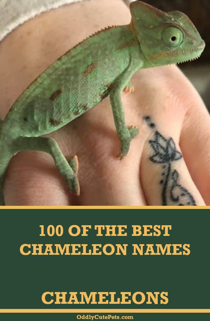 100 Best Chameleon Names In 2020 Chameleon Pet Pet Names Cool Pet Names