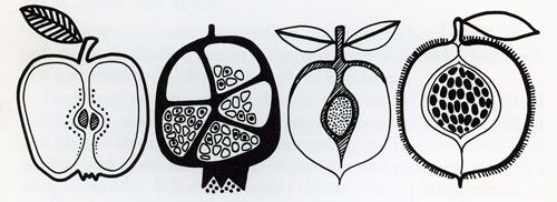 Seed-pod-sketch