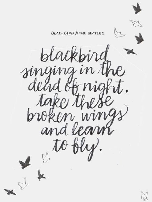 Black bird beatles