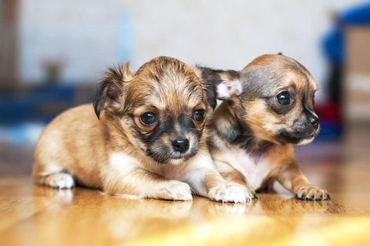 Small Female Dog Names Unique Little Names For Your Girl Small