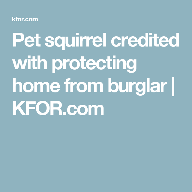 Pet squirrel credited with protecting home from burglar | KFOR.com