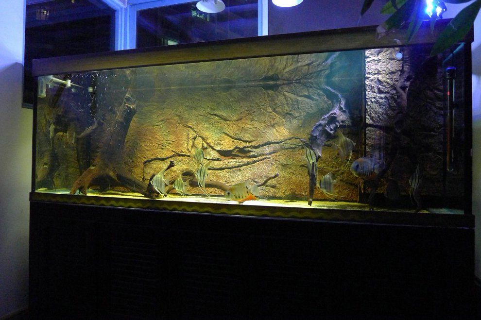 Bj931 Rock Background Wall 150 60cm Yellow Color Aquarium Landscape Rock Background Background