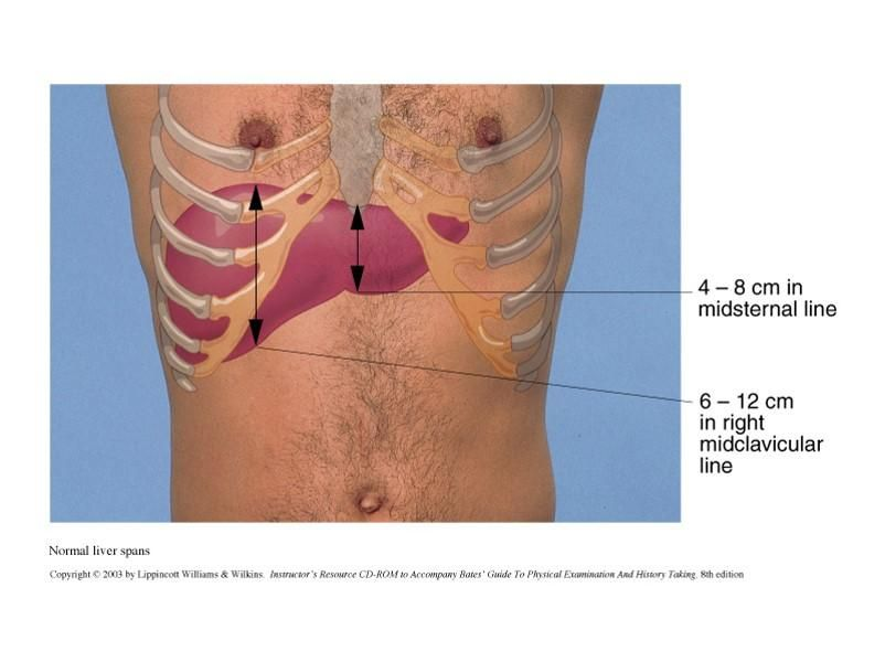Normal liver span | Medicina | Pinterest