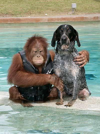 15 Insolitas Historias De Amistad Entre Animales 43 Fotos
