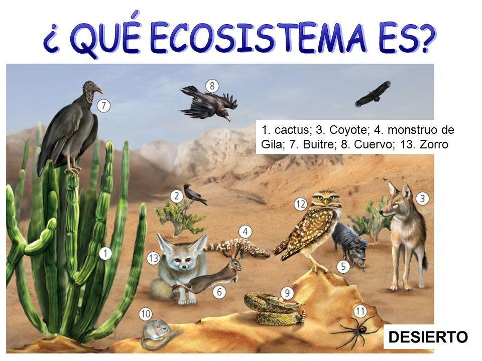 desierto   ECOSISTEMAS...