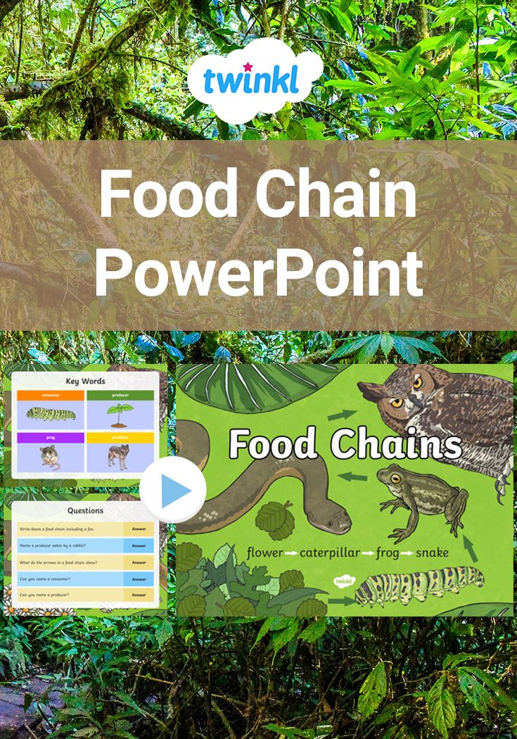 Food Chains PowerPoint. This PowerPoint looks at the