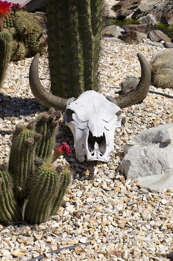 Download pic of rectangular terrarium - Google Search | Cow skull ...