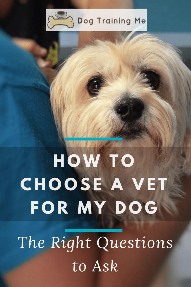 How To Choose A Vet For My Dog Howtochoosingadog Choosing A Dog Dog Behavior Problems Dogs