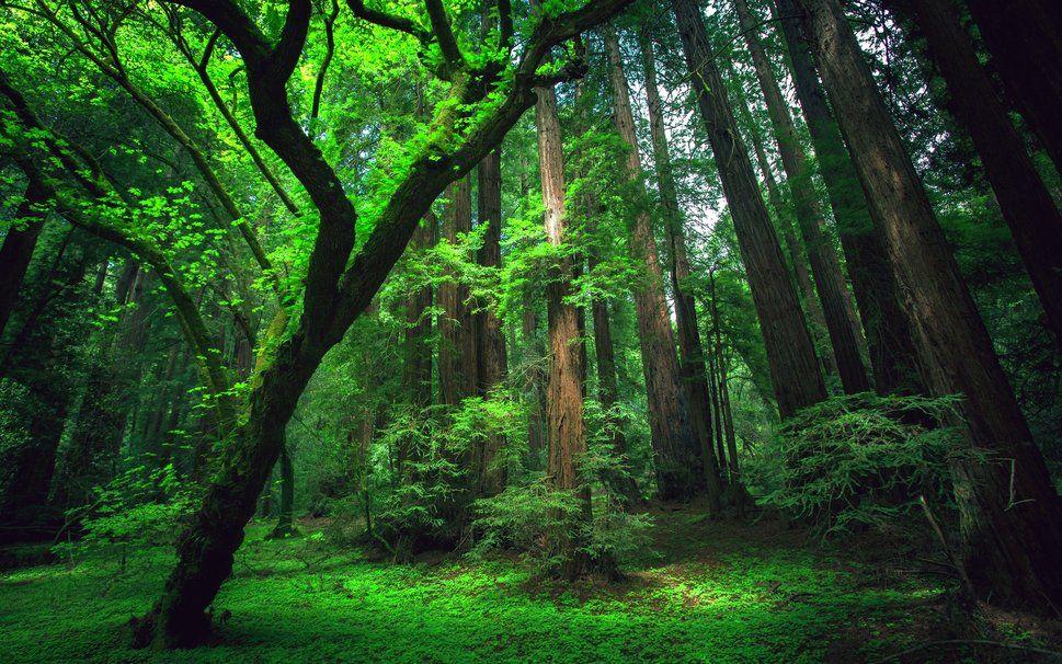Foresta Amazzonica File Vettoriale Forwallpaper Com En