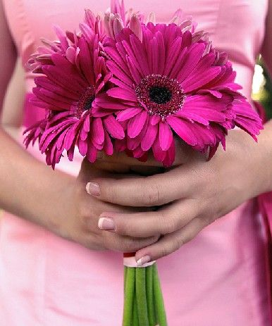 Bridesmaid Bouquet Fuschia Pink Gerberas Dark Color Flowers