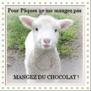Humour Agneau De Paques Devenez Vegetariens Paques Chocolat