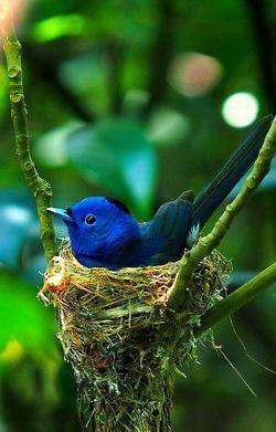 Sweet little blue bird in cozy nest