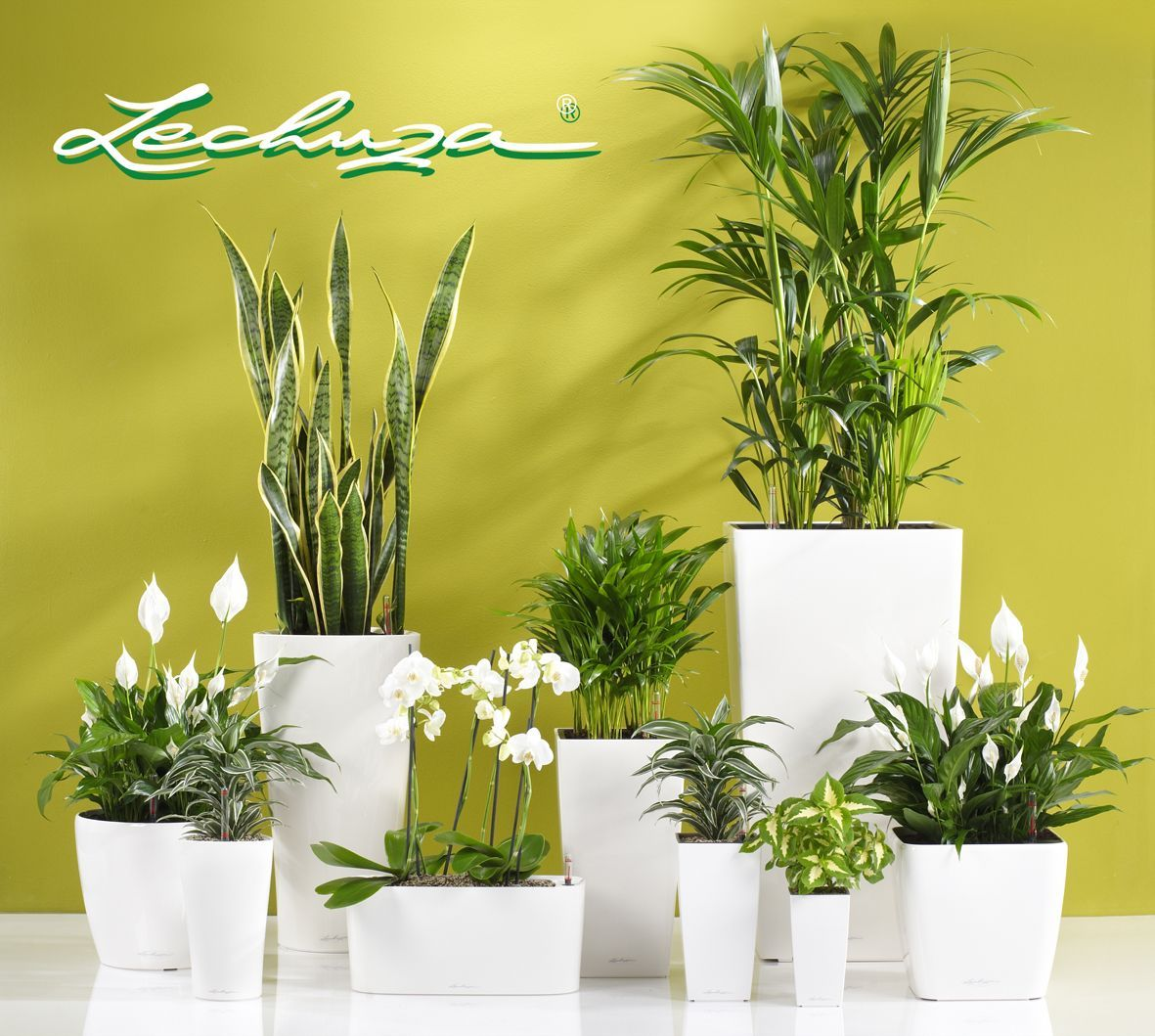 Self watering planter yes lechuza planters exclusively available at clima outdoor www - Lechuza self watering planter ...