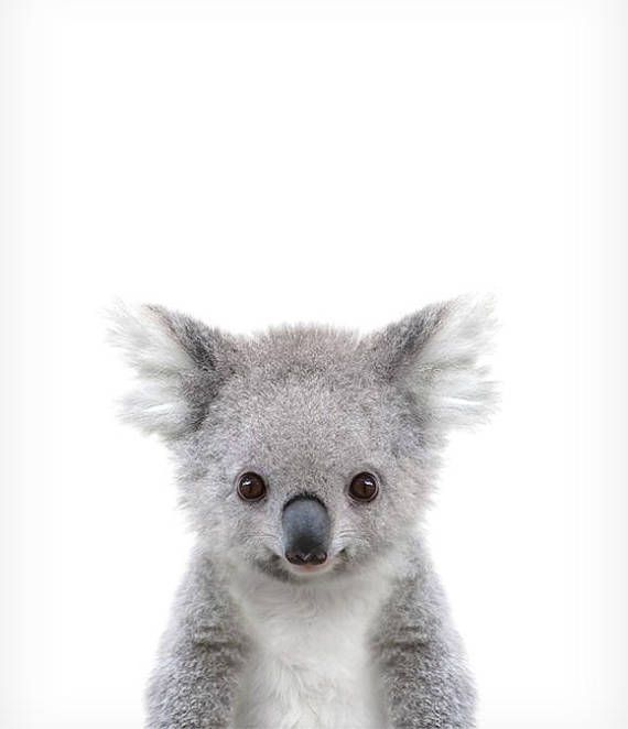 Koala print, Baby animal prints, Zoo animal nursery, The Crown Prints, Nursery wall decor, Baby animal nursery, Baby room prints, Wall art