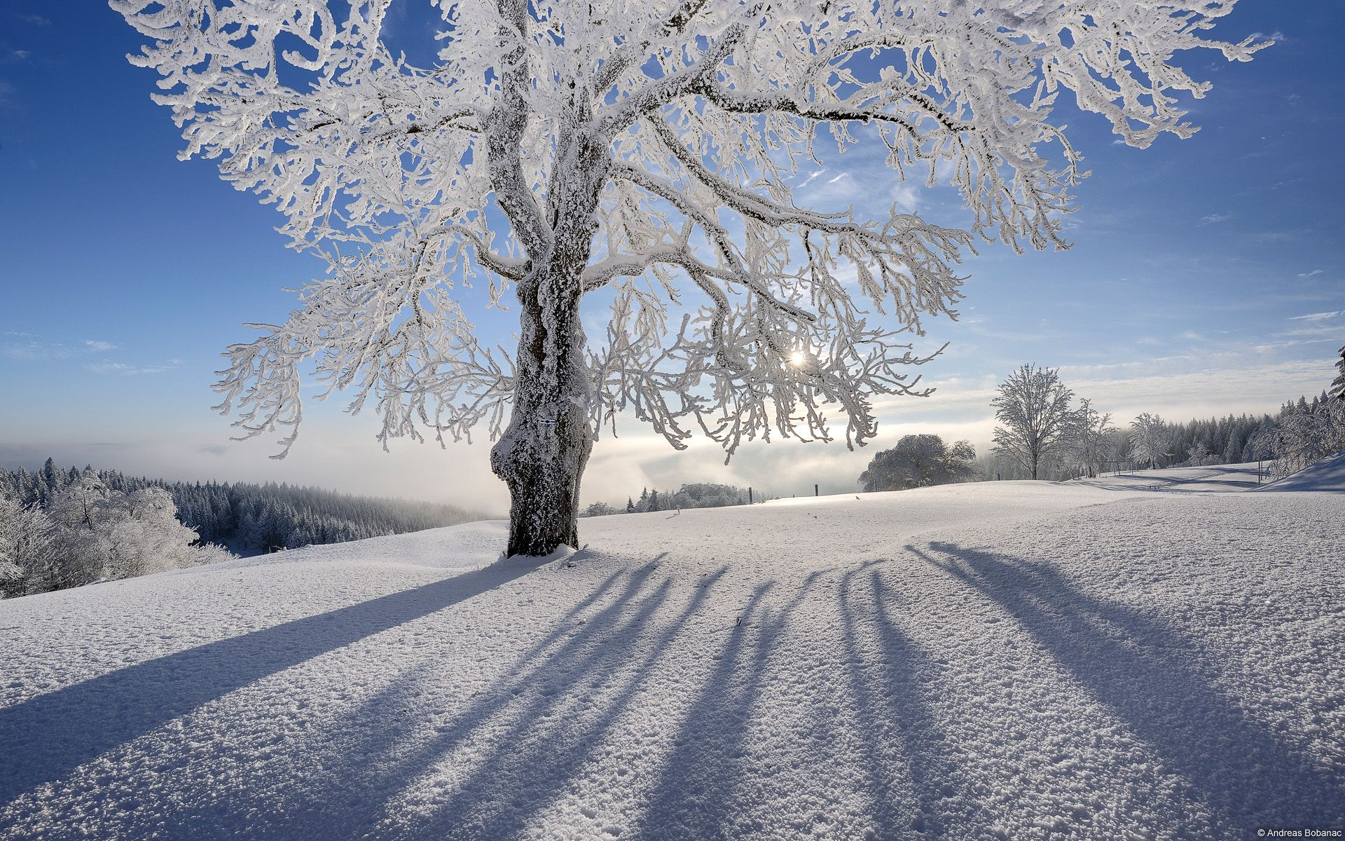 explore and share winter christmas desktop backgrounds