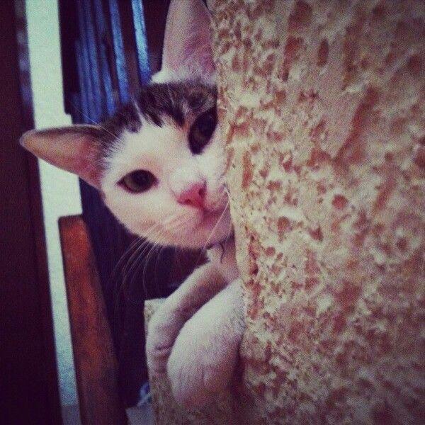 Te estoy viendo #bestfriends #animallover #gatitolindo