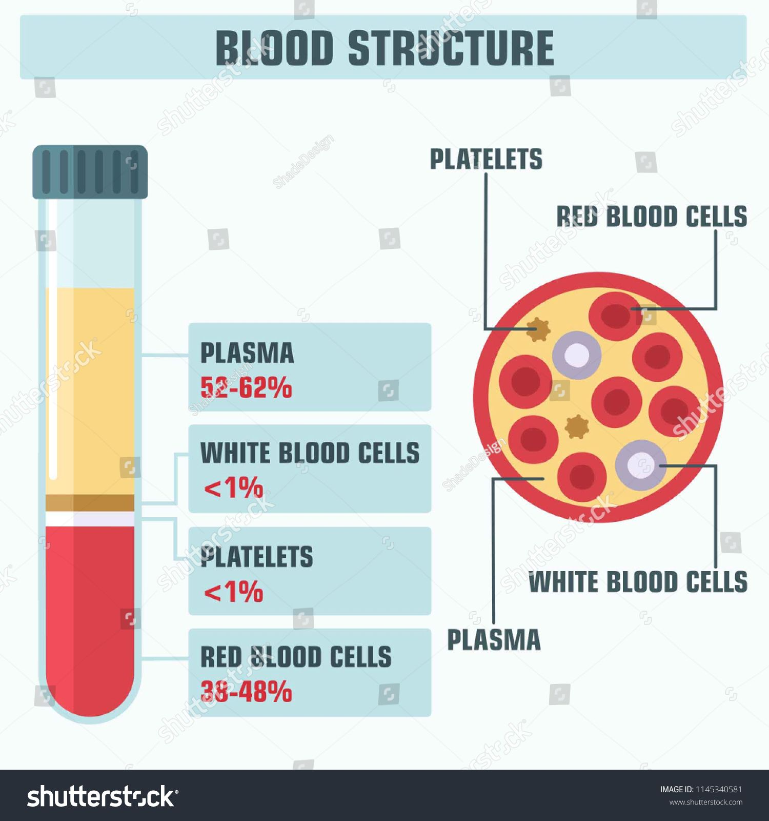 Components Of Blood Worksheet Answers