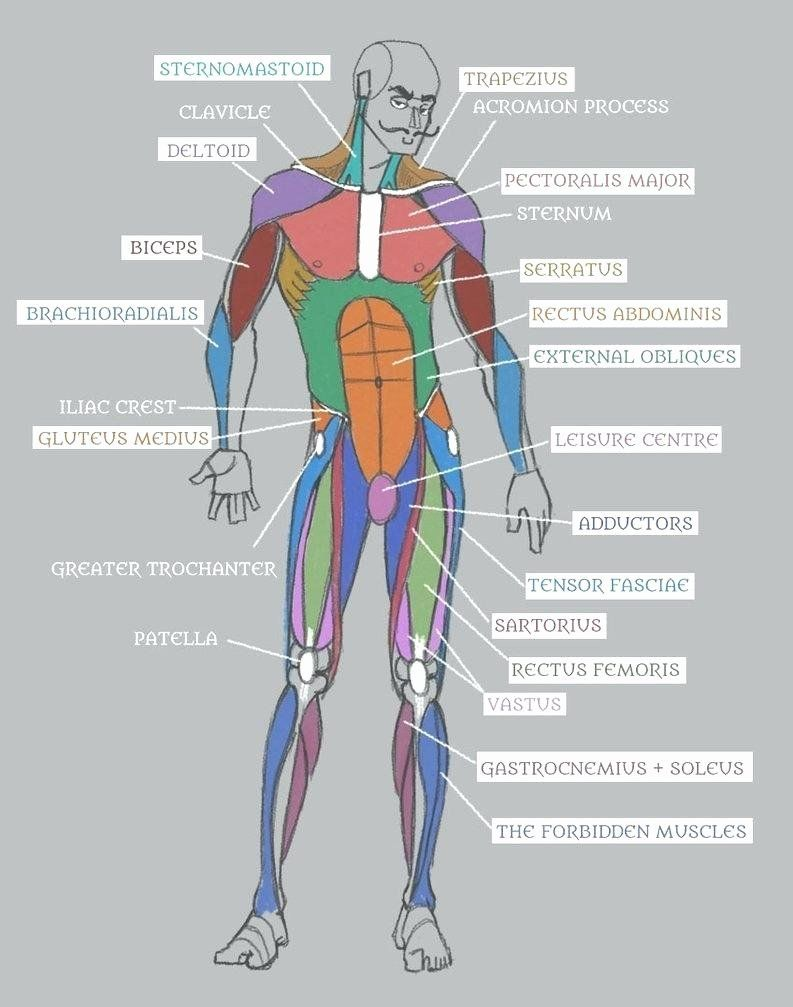 coloring pages anatomy human body