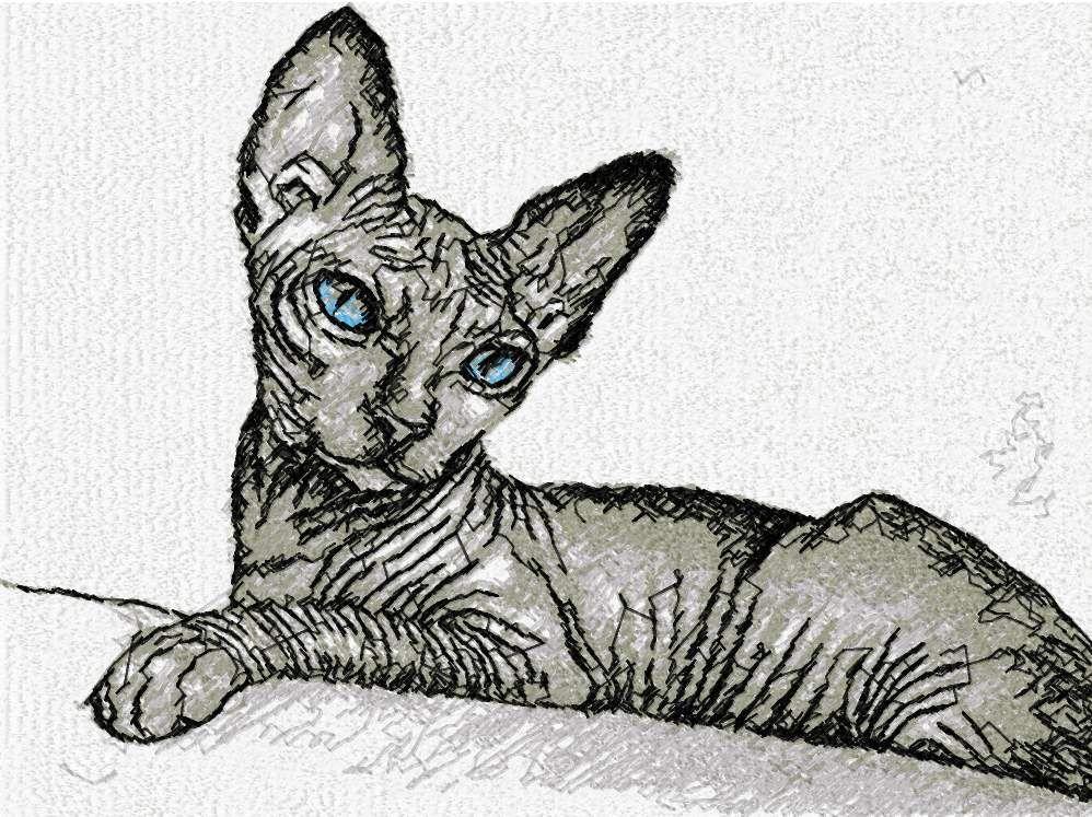 Sphynx Cat Photo Stitch Free Embroidery Design Photo Stitch