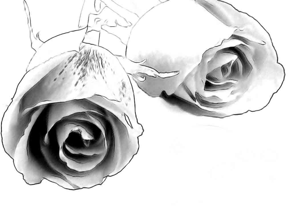 It is a photo of Terrible Charcoal Rose Drawing