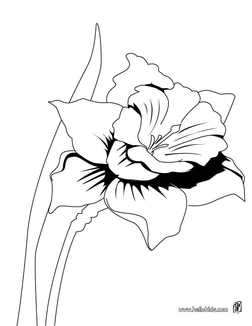 Detailed coloring pages for adults the daffodil coloring page you will find so much more coloring pages