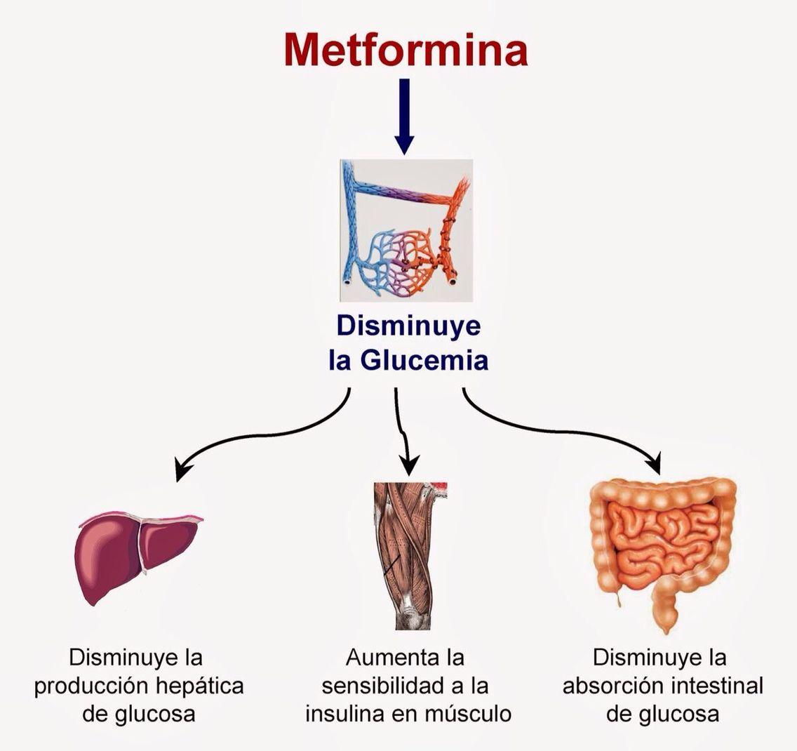 Efectos secundarios de la #metformina y sus beneficios para tu ...