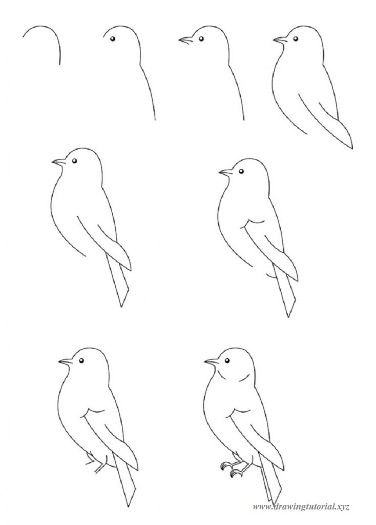 How To Draw Birds How To Draw Birds Guide For Beginners