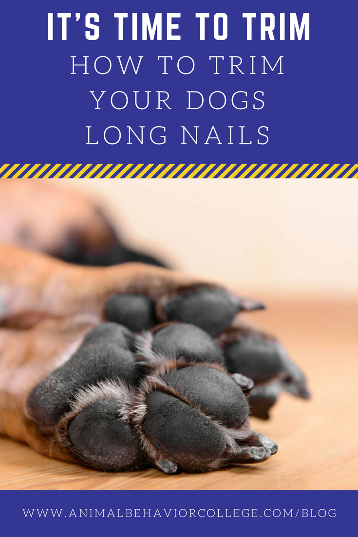 It's Time to Trim Those Overgrown Dog Nails Dog nails