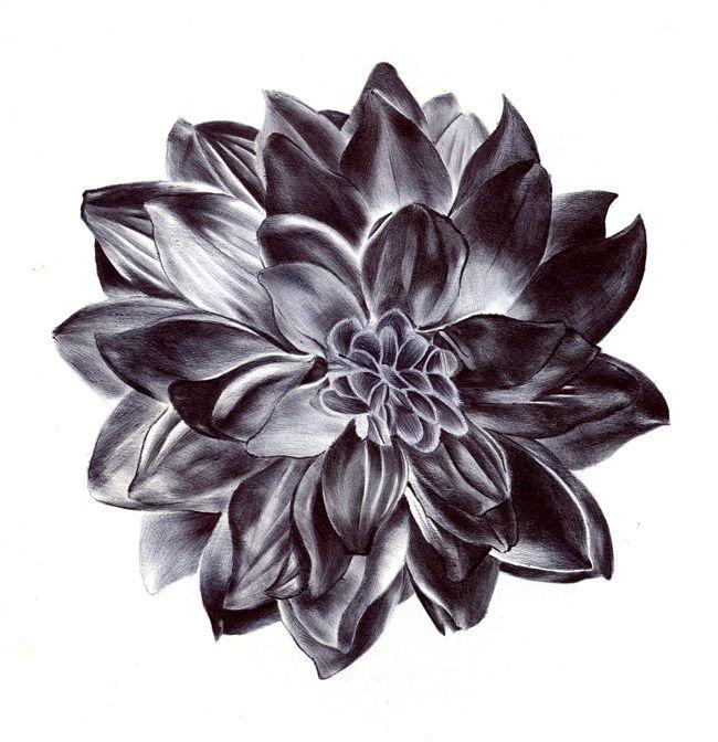 403 Forbidden Black Flowers Tattoo Dahlia Flower Tattoos Black Art Tattoo