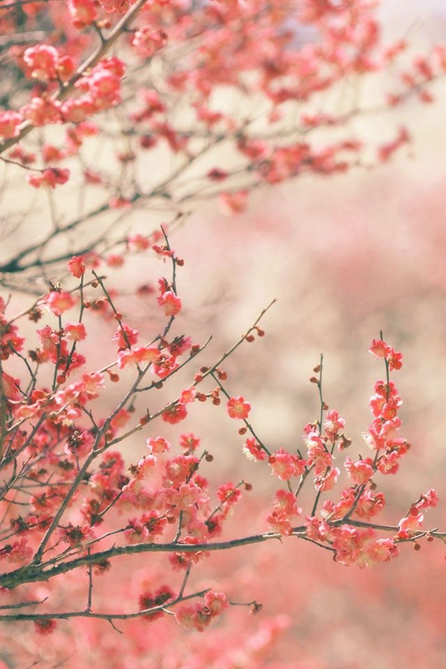 FREEIOS7 | spring-in-pink-2 - parallax iphone wallpaper ...