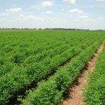 الزراعة 4 ملايين فدان منزرعة بالمحاصيل الصيفية حتى الآن كشف تقرير رسمى لوزارة الزراعة واستصلاح الأ Agricultural Land Agricultural Land For Sale Agriculture