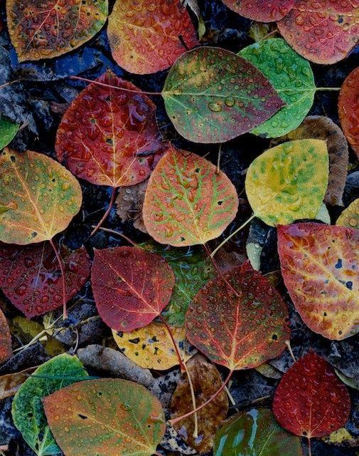 Aspen Leaves Nature Herbst Farben Landschaftsfotografie Und