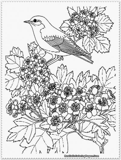 Realistic Bird Coloring Pages For Adults | Coloring Pages | Coloring ...