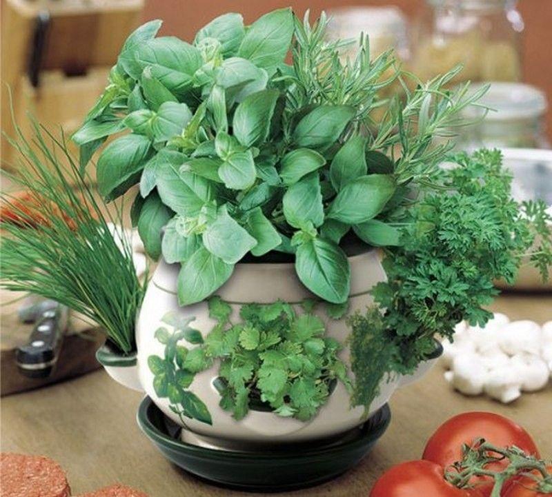 Flower Garden Plants, Indoor Herb Garden