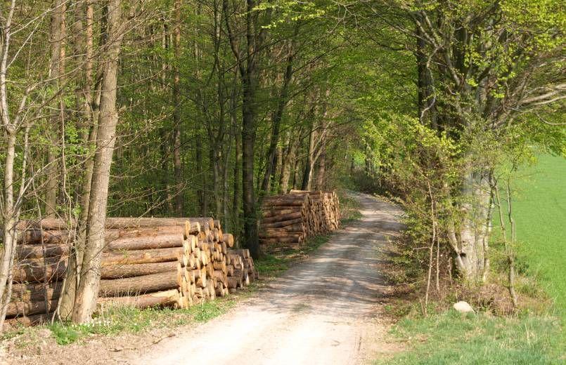 Waldweg Dalherda Schone Orte Wasserkuppe Natur