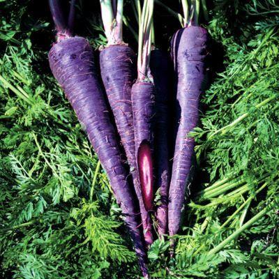 500Pcs Purple Sweet Potato Seeds Vegetables Seeds Fresh Food Purple Potato Seeds