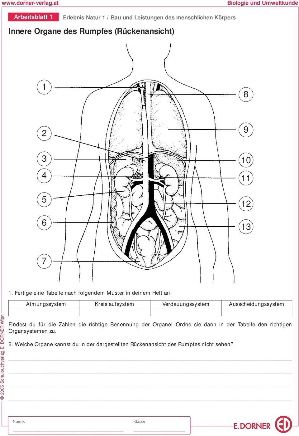 20 Verdauungssystem Arbeitsblatt Pdf Arbeitsblätter