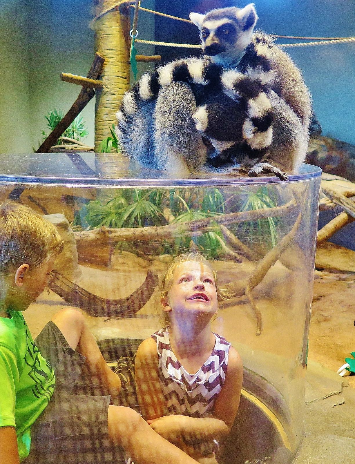 South Carolina Aquarium Charleston Sc Kid Friendly