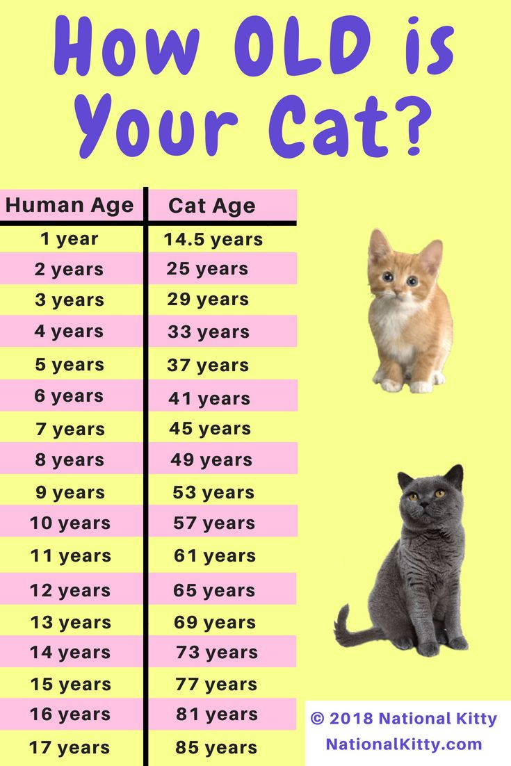 Pin by Lexi Jean on Cute Animals Cat years, Cat ages