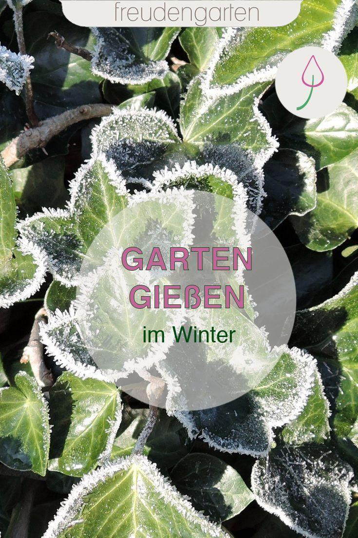 Garten im Winter richtig gießen