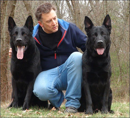 Pin By Canine Protection International Cpi On German Shepherds
