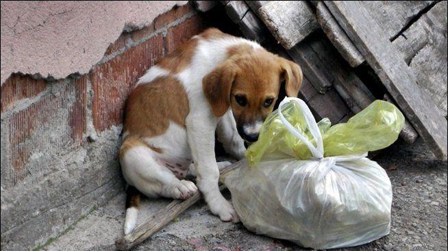 Petizione · Vereador Jairo Balderrama Pinto: Uma nova chance aos animais…