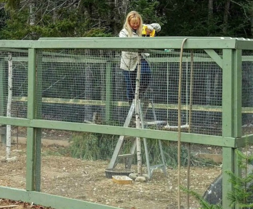 How to Build a Chicken Run is part of Building a chicken run, Portable chicken coop, Building a chicken coop, Chicken coop run, Diy chicken coop, Chicken coop kit - To keep chickens safe from predators and to keep your landscaping safe from the chickens, you'll need a safe run for them  Here's how to build a safe and secure chicken run