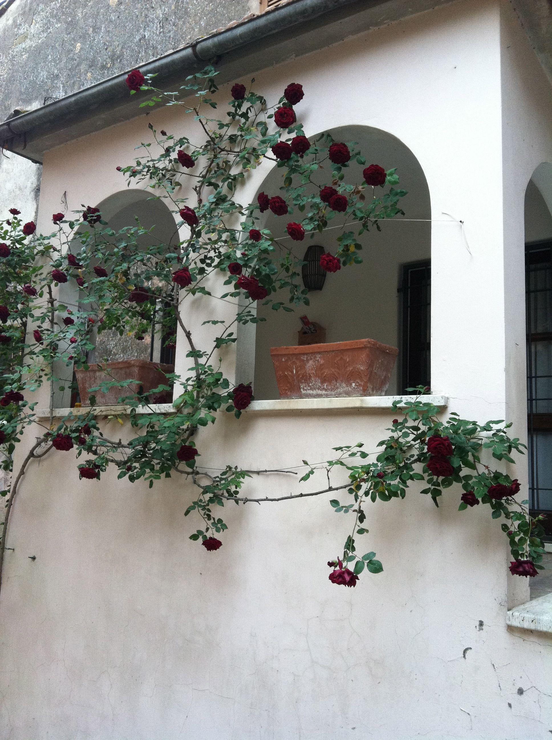 Someone's entrance in Otricoli, spring rose climber.