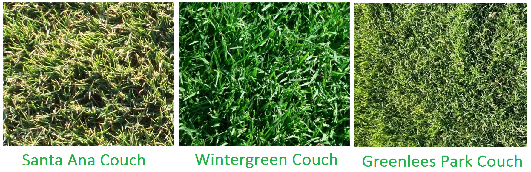 Couch Grass Varieties Also Make A Good Choice Grass How To Make
